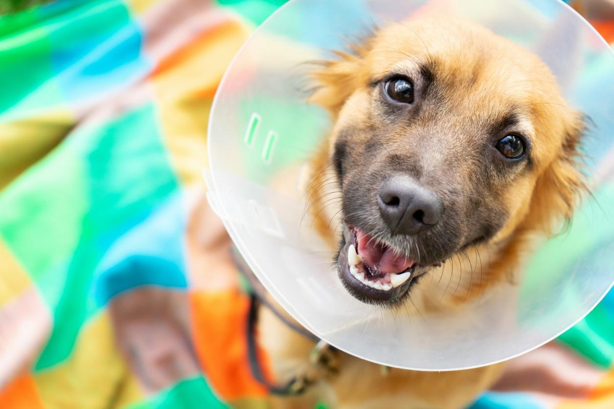 """article """"Vos animaux sont-ils géniaux !? Ils méritent du CBD. Voici le scoop"""""""